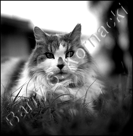 Prissy, black and white photography