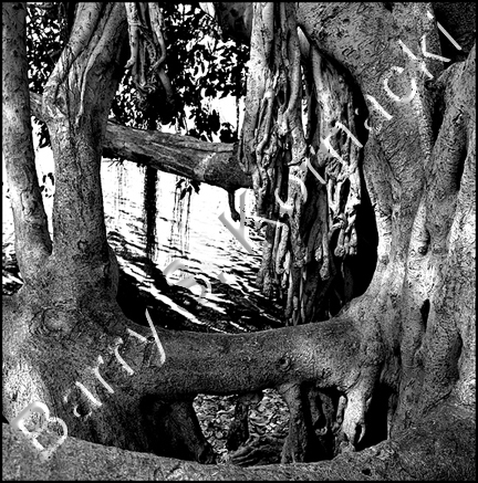 Banyan Treetop, black and white photograph